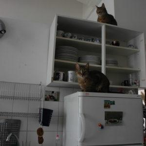 Zwei Katzen in einer Küche